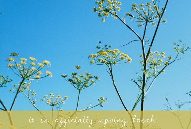 spring break and flowers